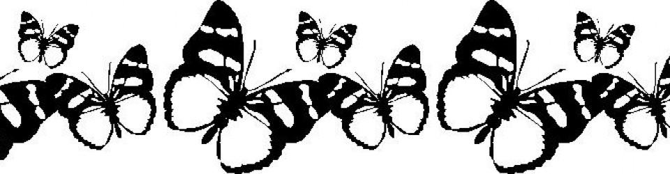 butterfly_3868